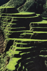 An ancient rice terrace in the Philippines
