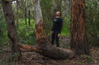 Global play specialist Marcus Veerman at the site of the Coburg North treehouse after its removal.
