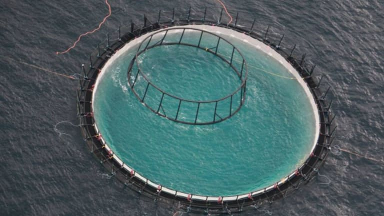 A file photo of the Huon Aquaculture and NSW Department of Primary Industry commercial-size yellowtail kingfish trial site off Port Stephens.