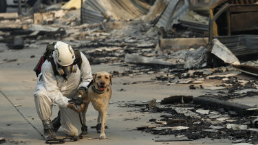 A search and rescue worker tends to his dog while searching for human remains in Paradise, California.