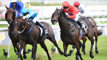 Getting her toe in: Moss Trip storms down the outside to win the James Carr Stakes at Randwick last year.