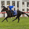 Canberra racing boss says Black Opal winners speak for themselves