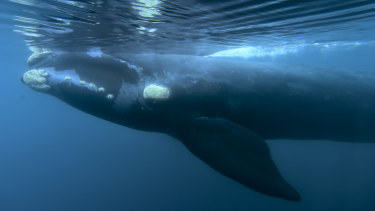 A proposal to create a whale sanctuary in the South Atlantic has been defeated at a meeting of the IWC.