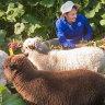 Fur flies as COVID-19 shutdown hits Collingwood Children's Farm