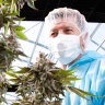 Why more people are turning to medicinal cannabis