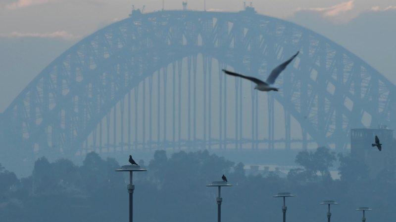 smoke sydney - photo #17