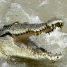 Life-threatening decision to tamper with a croc trap results in a fine