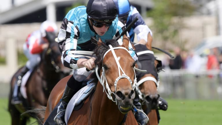 Form: James McDonald rides Naval Warfare – strongly favoured in the New Year's Day Cup in race five today – to victory in the Membership Handicap at Warwick Farm.
