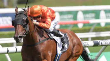 Dreamforce is one for the favourites for the Epsom Handicap at Randwick next month.