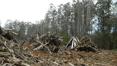 VicForests has been barred from logging operations in the Central Highlands, following a landmark ruling in the Federal Court.