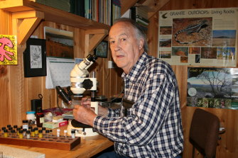 Dr Ian Bayly at work in his private, post-retirement zooplankton laboratory.