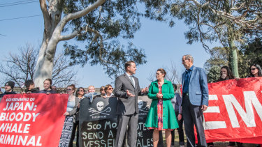 Greens senators Sarah Hanson-Young and Peter Whish-Wilson joined former leader Bob Brown outside the Japanese embassy on Tuesday.