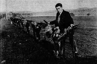 Dead wedge-tailed eagles in a picture which appeared in The Age Literary Review on May 28, 1966.