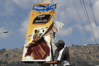 An advertisement promotes guinea pig ice-cream.