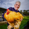 Chickens come home to roost at the Royal Melbourne Show