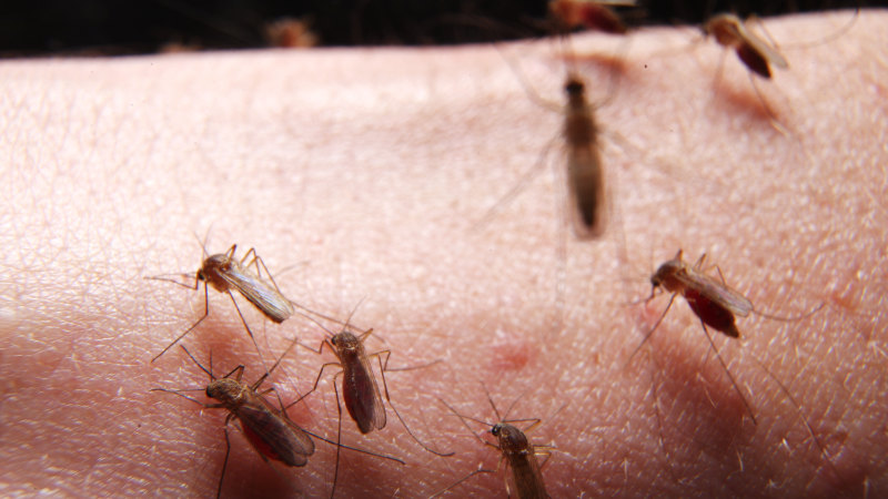 Heavy rainfall triggers spike in Ross River Fever cases in north Brisbane