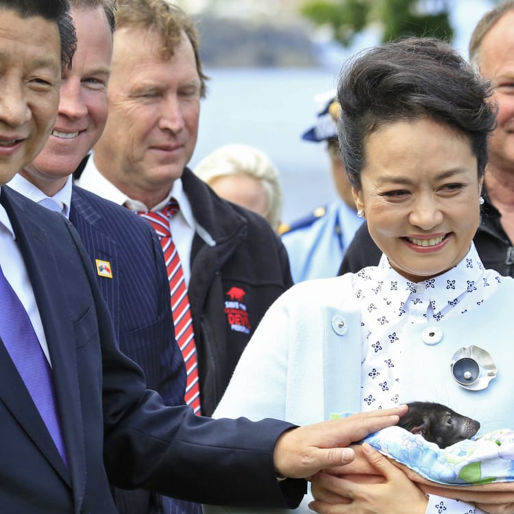 The 2014 visit to Hobart by Chinese President Xi Jinping and Madame PengLiyuan (pictured with a Tasmanian devil) spurred a flood of Chinese tourists.