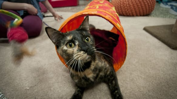 Silicon Valley landlord rents $US1500 studio to 2 cats