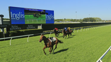 Lightweight chance: A riderless Nature Strip leads the trial at Randwick yesterday.