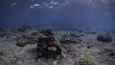 Great Barrier Reef after a coral bleaching event, which experts say doesn't just reduce the number of corals but damages the entire ecosystem.