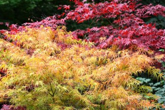 Wildwood garden at fire-stricken Bilpin will open again.