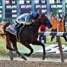 Triple Crown winner American Pharoah will have several progeny up for grabs in the coming months.