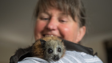 Julie Malherbe has cared for more than 70 bats in the past five years. Here she is pictured with Phoebe.