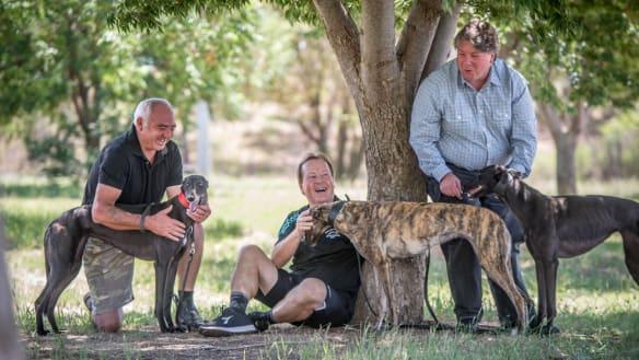 Canberra Greyhounds still winning despite ACT government ban