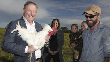 Opposition Leader Anthony Albanese holds up a chicken during his May visit with Labor candidate for Eden-Monaro Kristy McBain to  meet  bushfire-affected poultry farmers Lyndal and Dan Tarasenk.