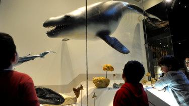 Janjucetus on display