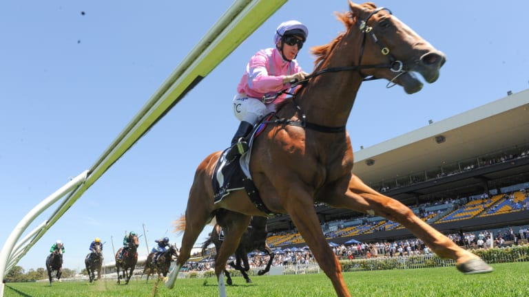 Baby steps: Czarson stretches out in the closing stages of his win at Rosehill.