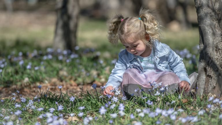 Three-year-old Alyrah Verri playing in the grass at Bowen Park in Barton. Experts say the dry conditions may impact how much pollen is produced.