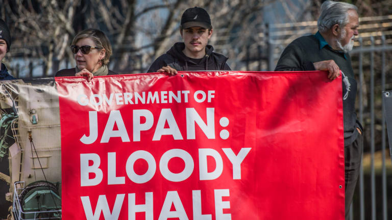 People protest outside the Japanese Embassy in Canberra.