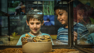 Kyle Rutter (left) and Aneesh Indrakanti check out one of the snakes at the <i>Snakes Alive!</i> exhibition at the National Botanical Gardens.