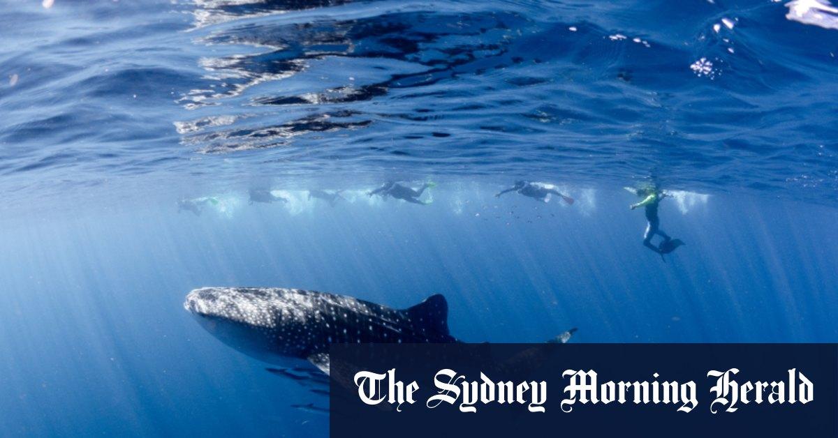 Australian scientists sound alarm on ecosystem collapse