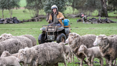 Quad bikes, pictured here without roll-over protection, are the leading cause of deaths on farms in Australia.