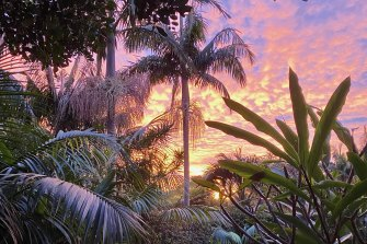 Rob Stokes' Mona Vale garden at dusk.