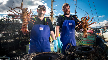 Taylor, left, happily admits to loving his job, but the overheads are huge and when his pots start coming up empty – or are full of lobster killed or disfigured by octopus – it's not a lot of fun.