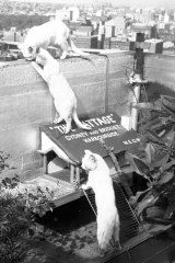 """As Sydney became more sophisticated, """"The Cattage"""" was seen as hokey."""