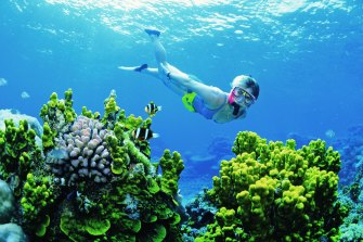 The Great Barrier Reef's coral not only provides tourism value but a physical protection for the coastline.