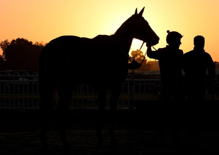 Legend: Winx in the morning light at Rosehill.