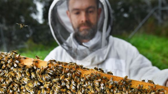 Beekeepers are renting out their hives to help pollinate almond trees