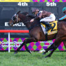 Boom or bust for Jazzland in South Grafton Cup