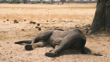 A  dead elephant lays in the Hwange National Park, Zimbabwe. At least 200 elephants have died amid a severe drought, authorities said last month.