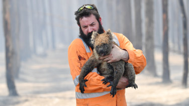 Adelaide wildlife rescuer Simon Adamczyk with a koala near Cape Borda on Tuesday.