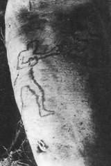 James Smith's arm that was thrown up by a shark in the Coogee Aquarium in 1935.