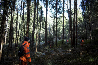SES searching in dense scrub for William Callaghan on Tuesday morning.