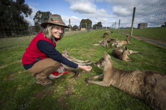 Mansfield Zoo owner Bronwen Wilson with her kangaroos on Wednesday.