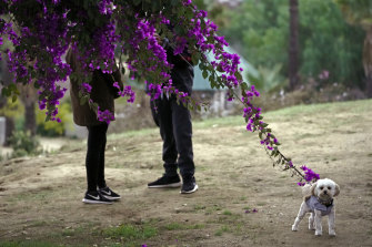 A couple walks their dog in Los Angeles. In the eyes of the law, pets are property when it comes to divorce.