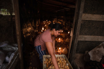 Jason Bobb-Semple's wife, Rosalene, on their small poultry farm in Georgetown, Guyana, built with a government loan.